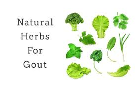 herbs to lower uric acid