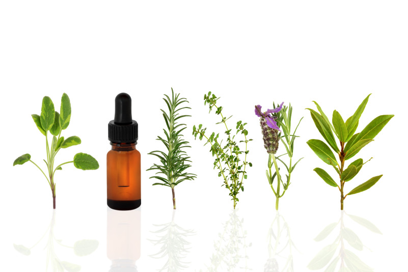herbs for immune system