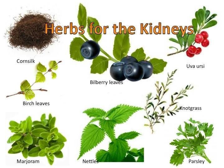 herbs for kidneyis