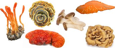 best medicinal mushrooms