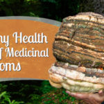 mushrooms health benefiits