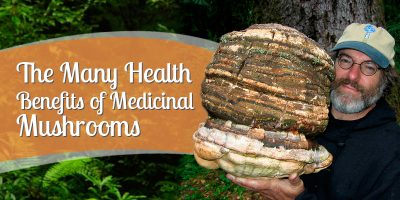 Healing with Mushrooms