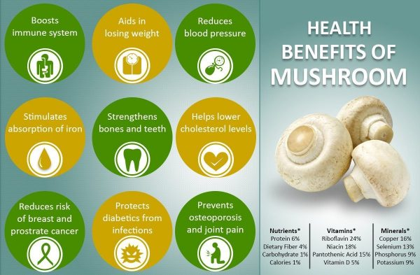 benefits of medicinal mushrooms