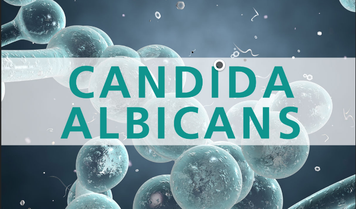candida albicans cleanse