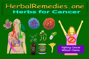 Herbs for Cancer