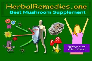 Mushroom Supplement