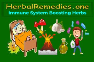Immune System Boosting Herbs